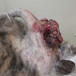 肛門周囲腺腫2